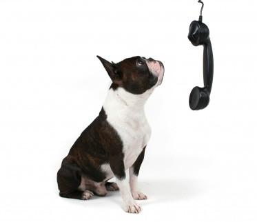 hond en telefoon