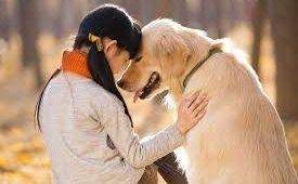 Hond emoties